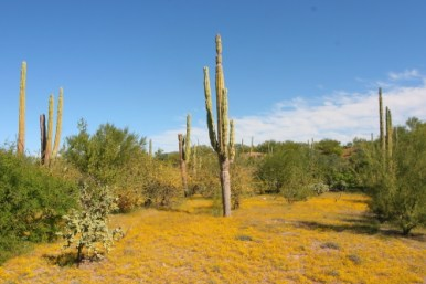 a desert environment with shrubland ecosystem