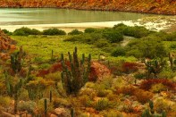 this is a protected island ecosytem of espirito santocosystemem in the aquatic environment of the sea of cortez
