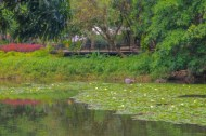 A Lagoon at Uribe Botanical Garden