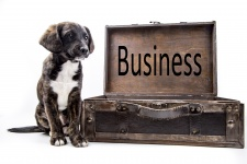Dog Business Photo