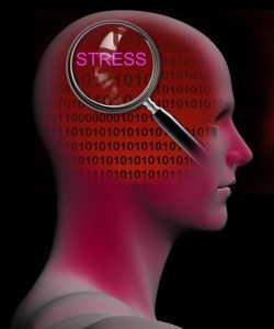 how the body reacts to stress