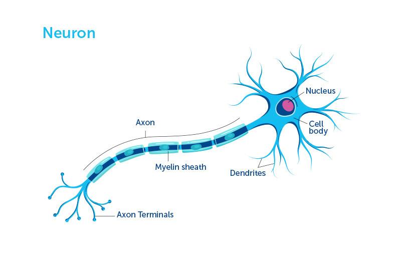ilustración neurona