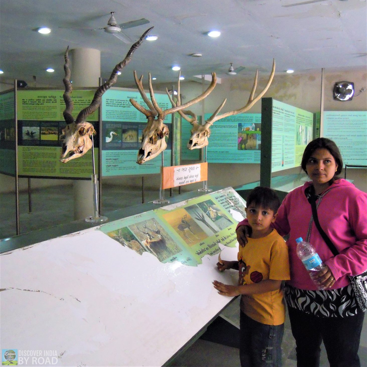 Natural history Museum of Sakkarbaug Zoo, Junagadh
