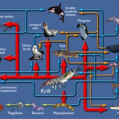 Ocean Food Chain Diagram 2006 Chevy Colorado Trailer Wiring Antarctic