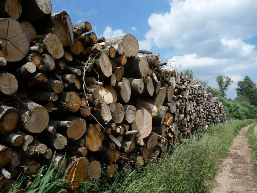 Timber neatly stacked by side of path