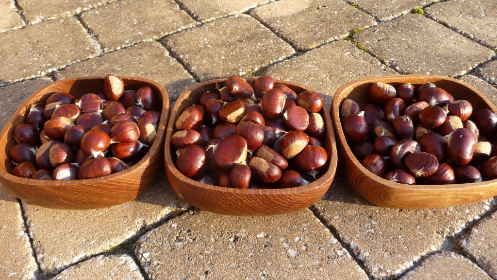 Bowls of chestnuts, freshly picked