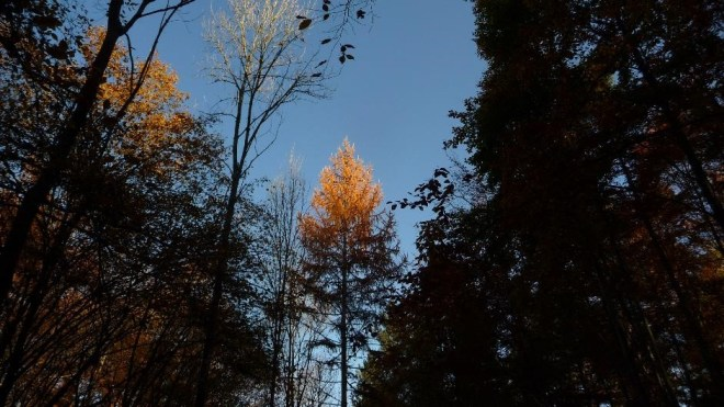 treetop1