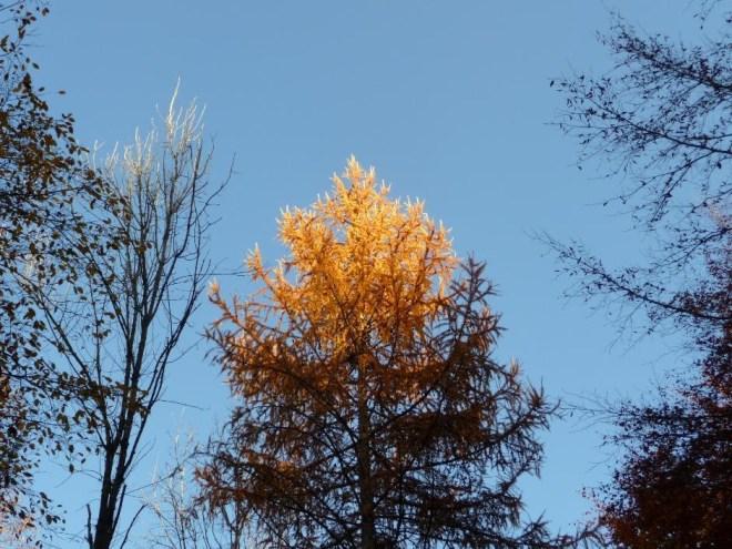 treetop3