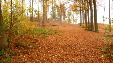 Walking in the forests around Langdorp, Belgium