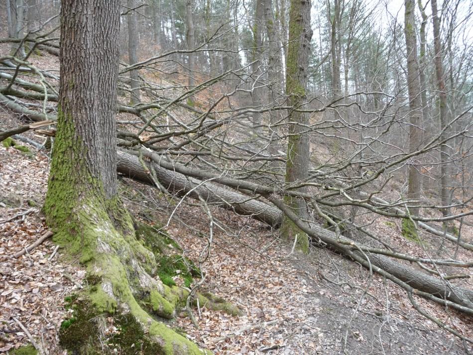 GR571-Coo-climb1