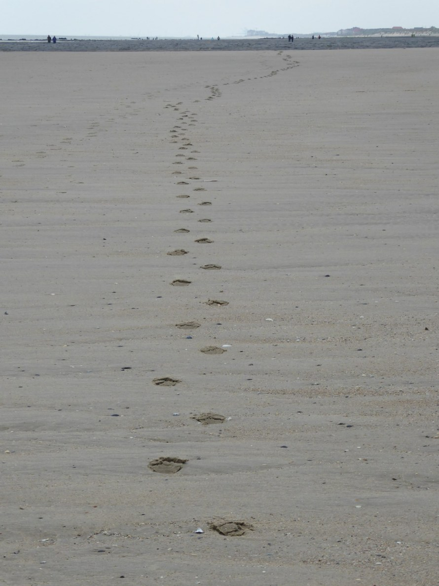Oostende-beach-footsteps