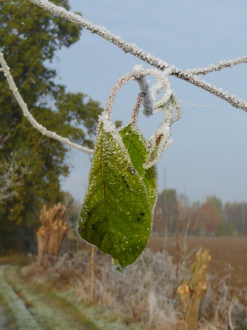 frosty-4