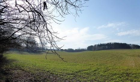 Duisburg fields