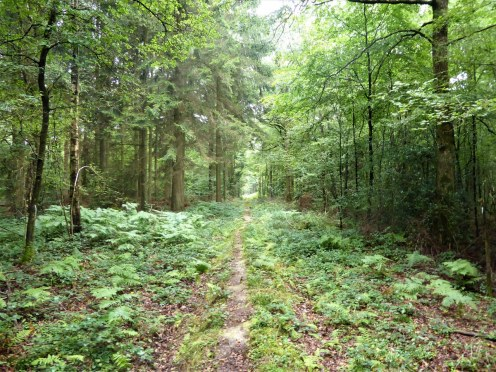 chimay: in the forests