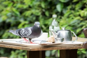 How to feed your garden birds