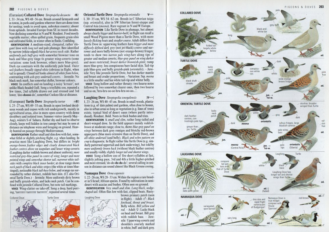Read a bird book as a coronavirus lockdown project!
