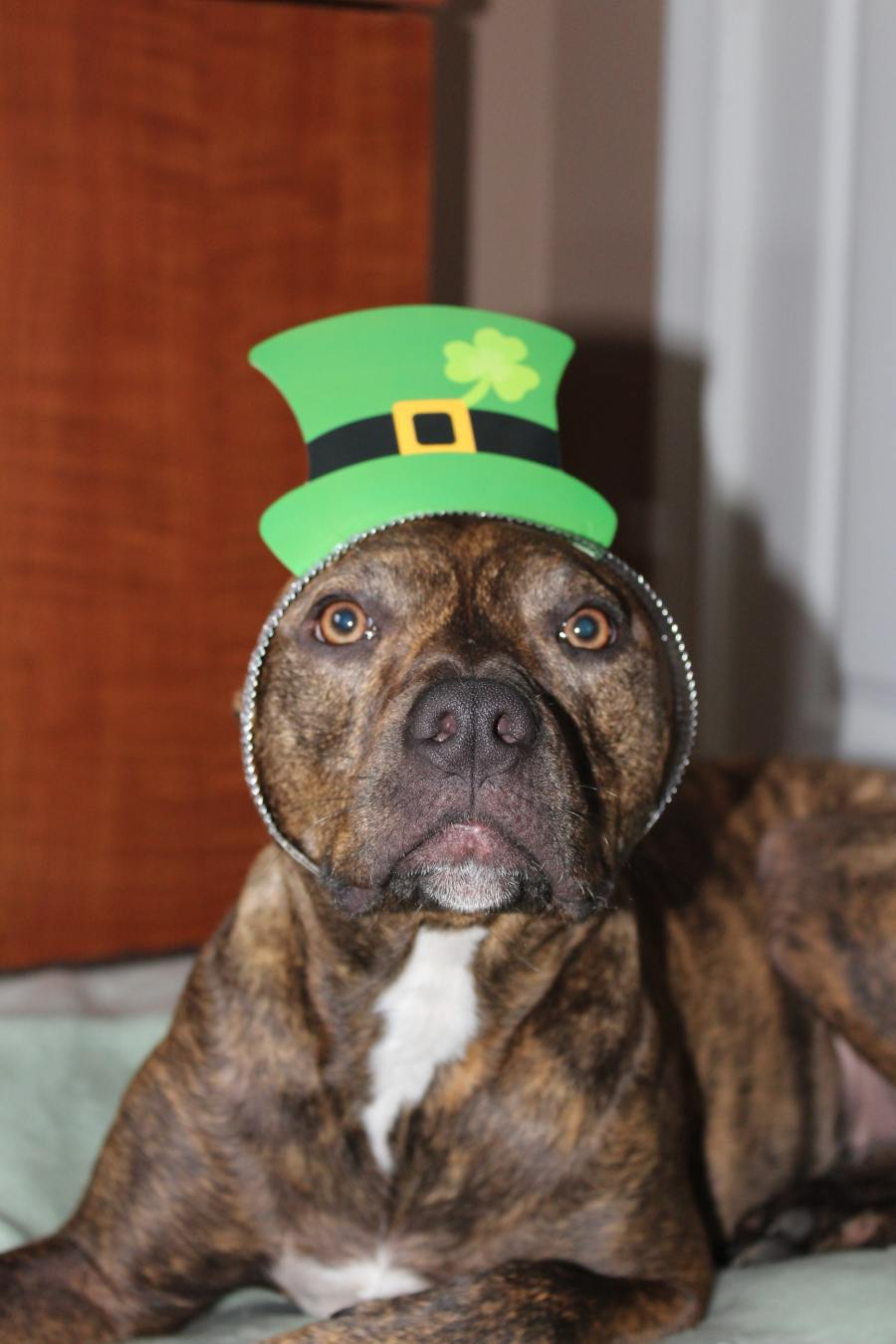 St. Patty's Day: Celebrate as a family