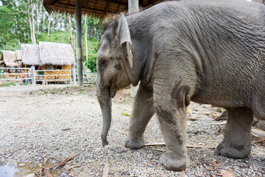 Phang Nga Elephant Park - www.discoveringyourhappy.com