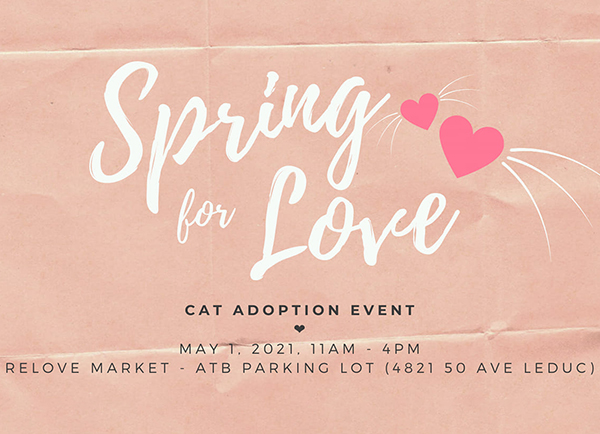 Spring for Love Cat Adoption Event | In Partnership with SCARS