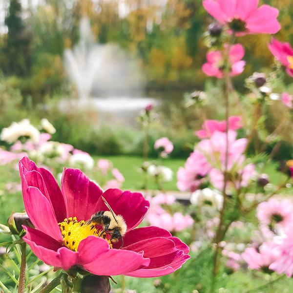 U-Pick Adventures at Farm Fresh Florals