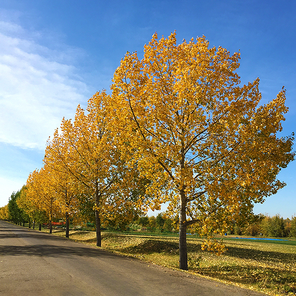 Best Fall Photo Spots in the Leduc Region Photo Credits: LaVerne Sturmay