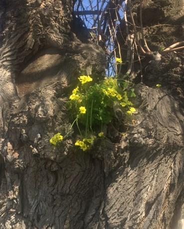 Tree Flowers Edited