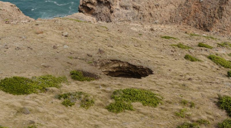 MVO Photo taken by Adam Stilton of the Sink Hole discovered on February 17, 2016 on the North Bluff.