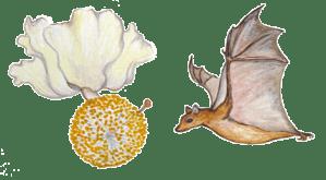 Bat Illustrated