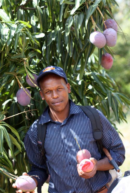 Mango Farmer