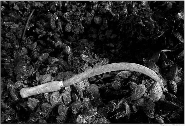 """Muscolai"" photo book by Claudio Barontini"