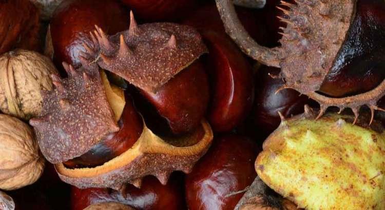 Fall Food: Chestnuts