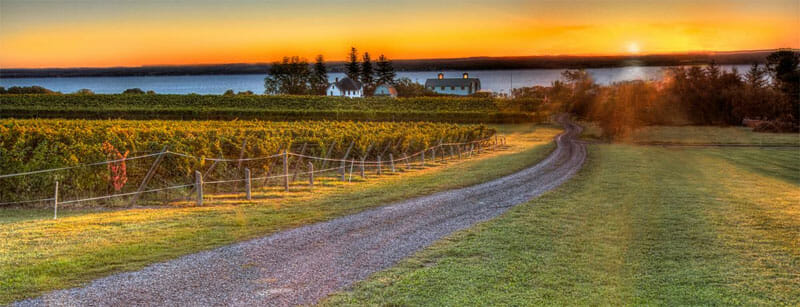 Fox-Run-Vineyard-Finger-Lakes-Wine-Country