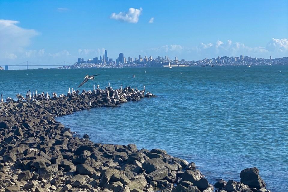 Seattle Restaurants on the Water - Spinnaker Point