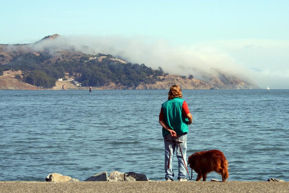 Dog-Friendly Sausalito Guide Hero