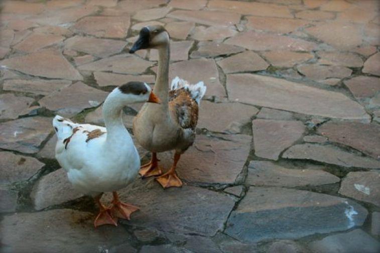 The resident geese made us feel like we wereback onthe Homestead. ;)