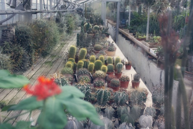 FA13_Misako Ono, botanical gardens (1)