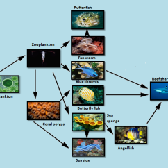 Coral Reef Food Chain Diagram 2 Light Switch Wiring Web The