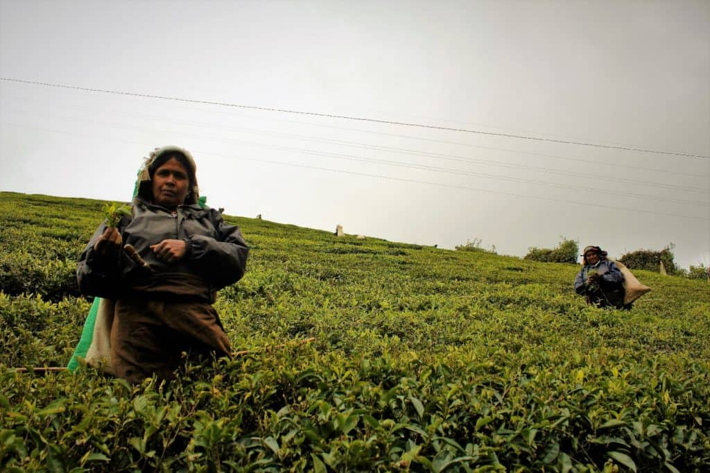 Best things to do in Sri Lanka- ladies picking tea in Nuwara Eliya