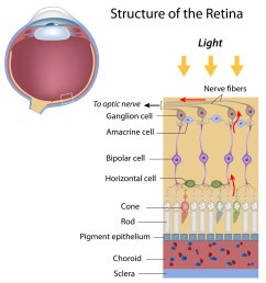retina and optic nerve [ 960 x 1000 Pixel ]