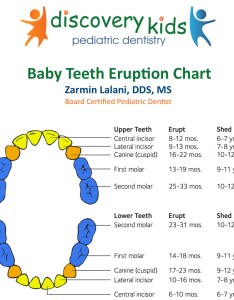 Teething in babies and baby teeth eruption chart at discovery kids pediatric dentistry also dentist frisco tx rh discoverykidsdentistry