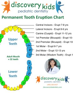 Permanent tooth eruption chart by discovery kids pediatric dentistry also dentist in frisco rh discoverykidsdentistry