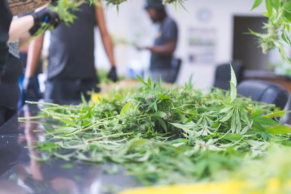 Marijuana Addiction Discovery Mood And