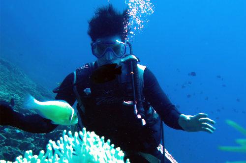 diving in bunaken and lembeh