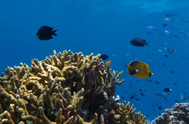 dive trip to bunaken