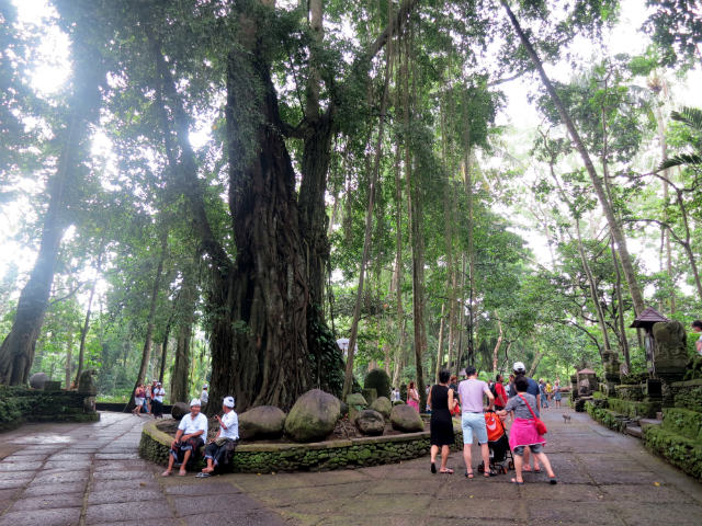 things to do in ubud monkey forest