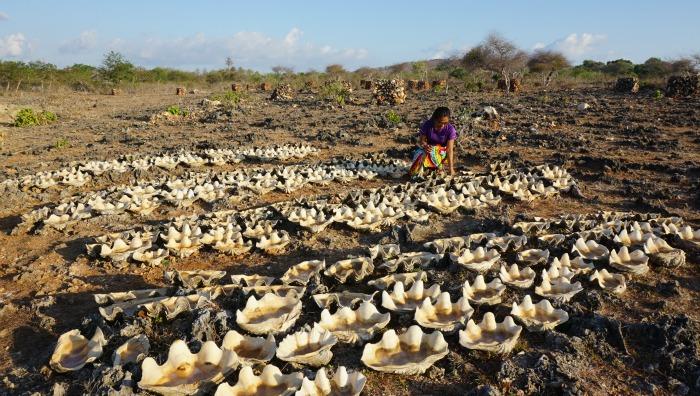Shell salt Semau island