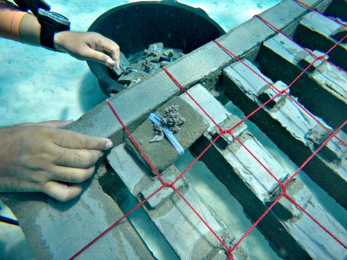 Soft Coral Planting underwater