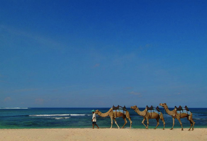 camel-riding-on-nikko-beach-in-bali