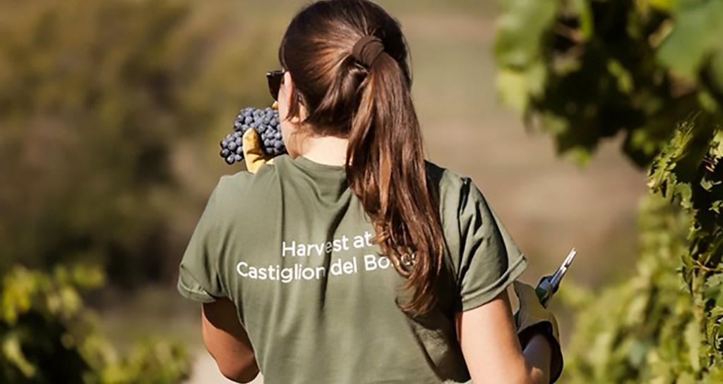 Harvest Experience & Event a Castiglion del Bosco IMG_7377-2_low