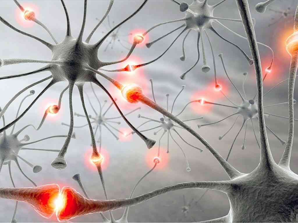MesoSPIMs: Custom-built microscopes that can scan individual neurons in the brain